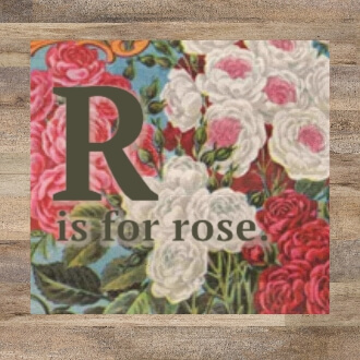 R is for Roses